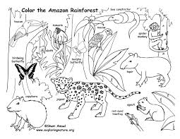 rainforest amazon coloring