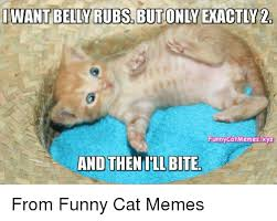 Cats Memes - 25 best memes about funny cats memes funny cats memes