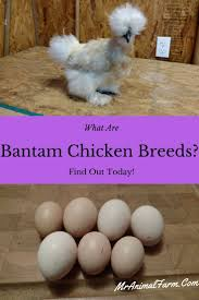 Best Backyard Chicken Breed by 12863 Best Self Sufficient Homesteading Images On Pinterest