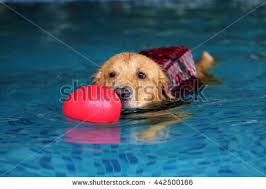 new year dog photo session on stock photo 773696968 shutterstock