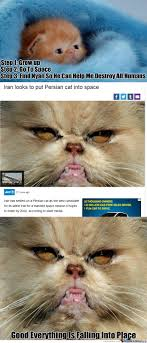 21 Of The Best Grumpy - grumpy cat s persian cousin by recyclebin meme center