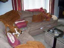 Dog Blankets For Sofa by Crazymisfits Com Boarding Pictures Of The Dog Rooms