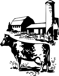 cow free stock photo illustration of a cow by a barn 10716
