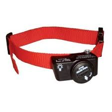 shock collars for dogs the info