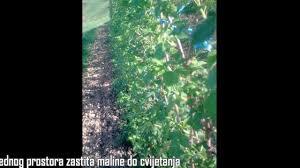 raspberry preparation for planting youtube