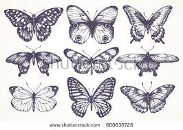 minimal butterfly download free vector art stock graphics u0026 images