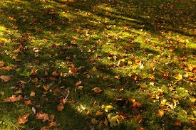 Fall Cleanup Landscaping by Fall Clean Up Services Commercial Lawn Care Landscaping Company