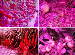 hydroponic led grow lights led grow lights supplier