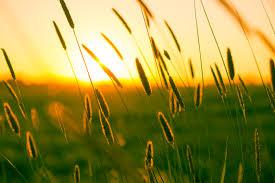 free stock photo of field meadow summer