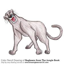bagheera jungle book colored pencils drawing bagheera