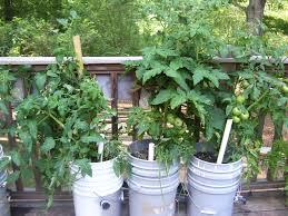 gardening basics planters beds and trellises giardino