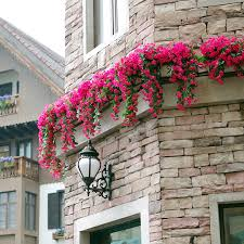 buy climbing vine flower plants flowers pungent shilixiang woody