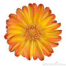Yellow Orange Flowers - image gallery orange yellow flowers
