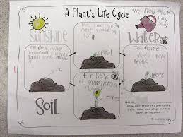 life cycle of a plant for kids book