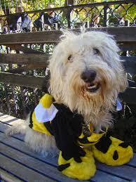 Sheep Dog Costume Halloween 14 Dog Halloween Costumes 2014