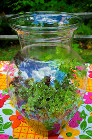 10 great terrarium plants