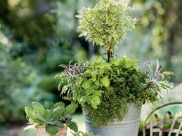 plant an herb container garden southern living