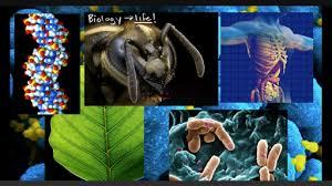 biology science khan academy