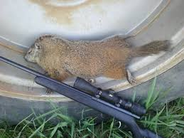 groundhogs 2017 ohio sportsman your ohio hunting and fishing