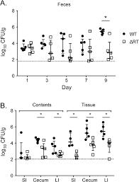 multicopy single stranded dna directs intestinal colonization of
