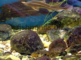using rocks in fish tanks with a friendly forum and faq