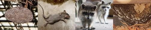 miami fox removal service miami fl