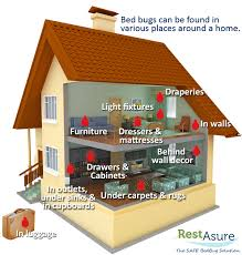 Can Bleach Kill Bed Bugs Restasure The Safe Bed Bug Solution