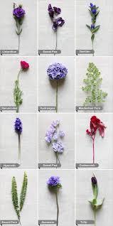 wedding flowers names best 25 purple flower names ideas on purple names