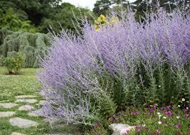 heat loving plants plants that can take the heat garden club