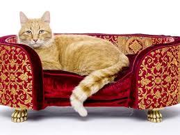 divanetti per gatti cucce per gatti come scegliere