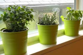 container growing herbs indoors garden culture magazine