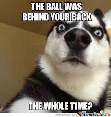 Meme Dogs - dogs by dragonlord69 meme center