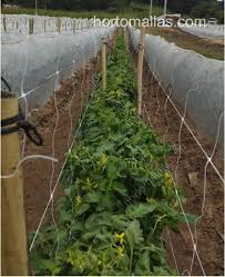 hortomallas trellis netting for professional horticulture growers