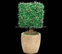 Topiaries Plants - 193 best artificial boxwood balls single ball topiary double