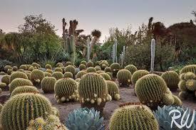 Botanical Gardens Huntington Desert Garden At The Huntington Pictures Photos Of Huntington