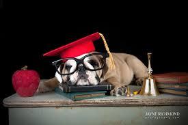 dog graduation cap graduation hat costume