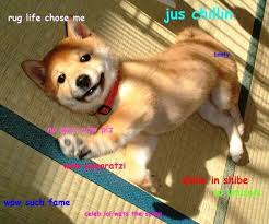 Meme Shiba Inu - the best of the hilarious shibe meme