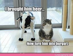 Make Your Own Cat Meme - he did all the hard work make your own cute captions cat s are