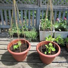 growing vegetables in containers u0026 pots how to guide