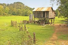 stilt house near rice field cambodia southeast asia stock photo