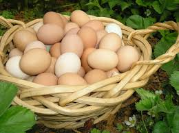 what you might not know about fresh chicken eggs