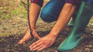 now you can plant a tree to offset s climate policies grist
