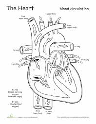 awesome anatomy follow your heart science worksheets
