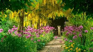 flower gardens flowers acacia hi 1366x768 278144 flower gardens