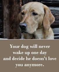 boxer dog sayings best 25 dog quotes love ideas on pinterest dog quotes pet