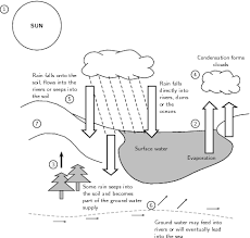 water carbon and nitrogen cycle worksheet water carbon and