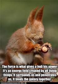 Squirrel Nuts Meme - animal capshunz nut funny animal pictures with captions animal