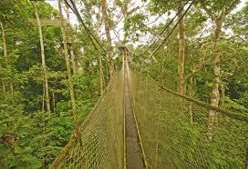 canopy amazon amazon nature tours paragon expeditions patagonia luxury travel
