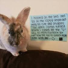 Funny Rabbit Memes - funny dog rabbit memes funny pics story