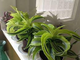 Home Plant Decor by Bring Color Into Your Home With Exotic Angel Plants Decorating